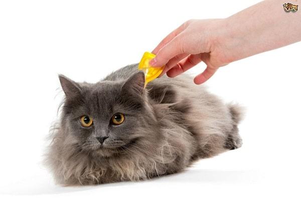 vlooiendruppels spot on pipet bij kat